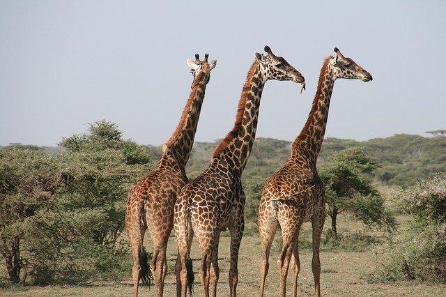 Giraffenkostüm für Kinder