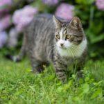 Der Katzen-Ratgeber für Neulinge