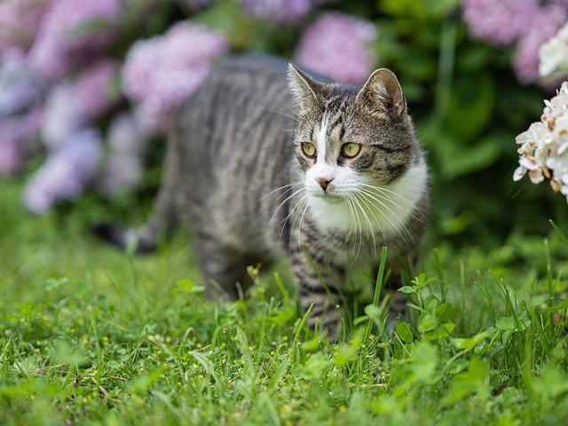 Katze oder Kater