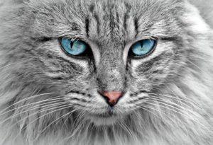 Katzenratgeber für Neulinge